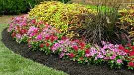 mulched annuals