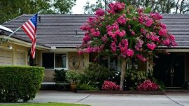 single-trunk-crape-myrtle-a-single-trunk-crape-myrtle-can-occupy-a-small-space-as-seen-on-corner-of-arroyo-drive-and-arroyo-avenue-in-north-single-trunk-red-rocket-crape-myrtle